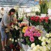 Floristės svajonė – paprasti namai su daug gėlių