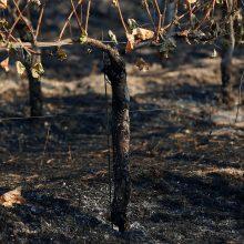 Kalifornijoje siaučiantys gaisrai nusinešė jau 31 žmogaus gyvybę