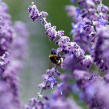 Aromaterapija: kai vaistus gali pakeisti natūralus produktas