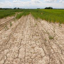 Sausra toliau alina Lietuvos ūkius, bet situacija miškuose gerėja