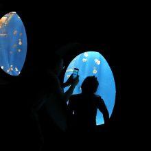 Populiariame akvariume nugaišo šimtai žuvų