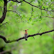 Pasaulyje mažai žmogaus paveikti miškai nyksta vis sparčiau