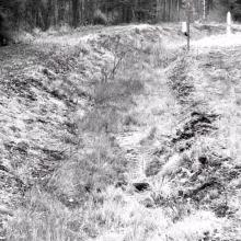 Pamatykite netikėtus sienos pažeidėjus Švenčionių rajone – keliaujančią vilkų gaują