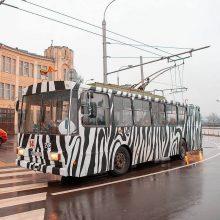 Nuo šiol zebrai – ne tik zoologijos sode, bet ir Kauno gatvėse