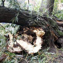 Pajūryje medžiai virto ant mašinų, apgadino bažnyčios tvorą