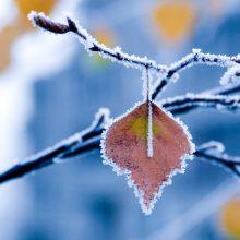 Orai: savaitgalį lietų pakeis šaltukas