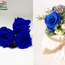 Rožės vazoje gali džiuginti net kelis metus
