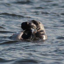 Gyvūnų daroma žala žvejams didėja