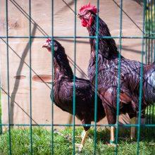 Dėl gyvūnų laikymo uostamiestyje – skundai
