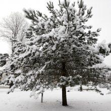 Orai: pajūryje laukiama sniego