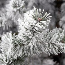 Pajūryje Kalėdos bus šiltos