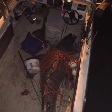 Į žvejo valtį įšoko ne auksinė žuvelė, o didysis baltasis ryklys