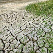 Ministras: EK nekompensuos dėl sausros patirtų nuostolių