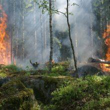 Įspėja: gaisrų tikimybė miškuose – vis dar labai didelė