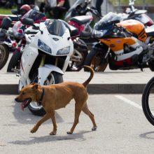 Baikerių akcijoje motociklais pavežėta 80 neregių
