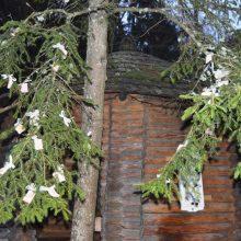 Palangos Birutės parke prieš Kalėdas apsigyveno Girinis
