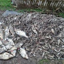 Neringa skelbia ekstremalią situaciją dėl į krantą išmestų žuvų
