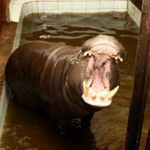 Zoologijos sodo prižiūrėtojai: netiesa, kad gyvūnai badauja!
