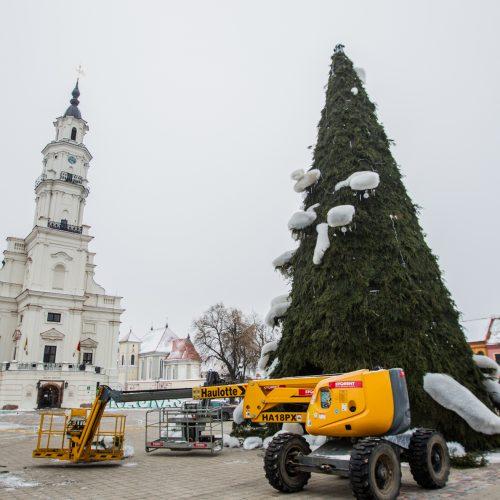 Kaunas atsisveikina su Kalėdų egle  © Laimio Steponavičiaus nuotr.