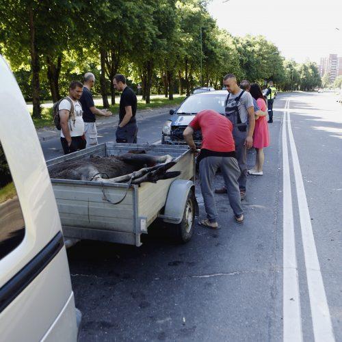 Liepojos gatvėje nutrenktas briedis  © Vytauto Petriko nuotr.