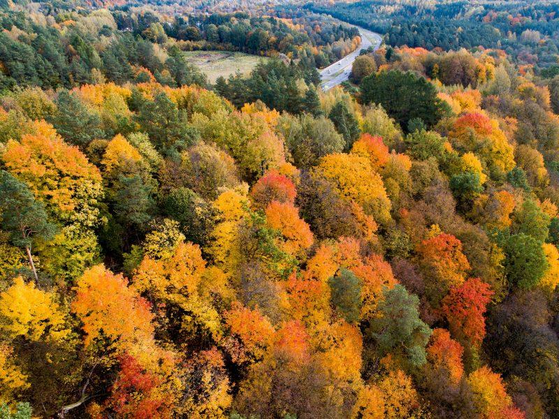 Orai: auksiniu rudeniu džiaugsimės iki savaitgalio