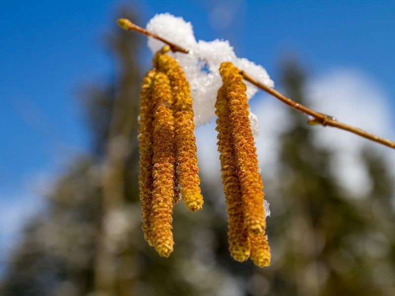 Orai: pavasarinę nuotaiką pagadins sugrįžusi žiema
