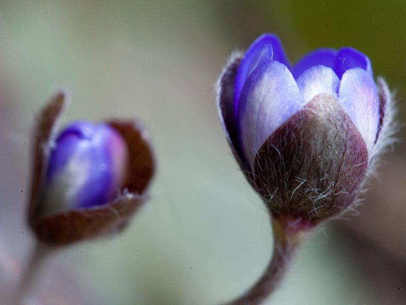 S. Paltanavičius: kai kuriomis pavasario dovanomis džiaugtis paskubėkite