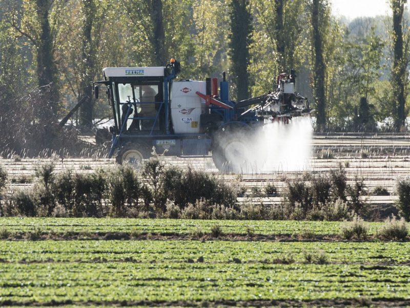 Uždraudė populiarų pesticidą, kuriuo galėjo apsinuodyti dešimtys žmonių