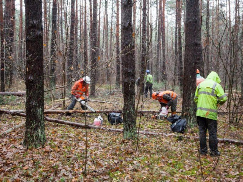 Mirė per miško kirtimo darbus sužalotas vyras