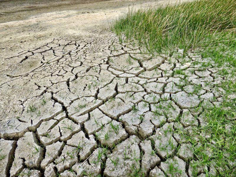 Dėl sausros siūloma skelbti ekstremalią situaciją šalies mastu