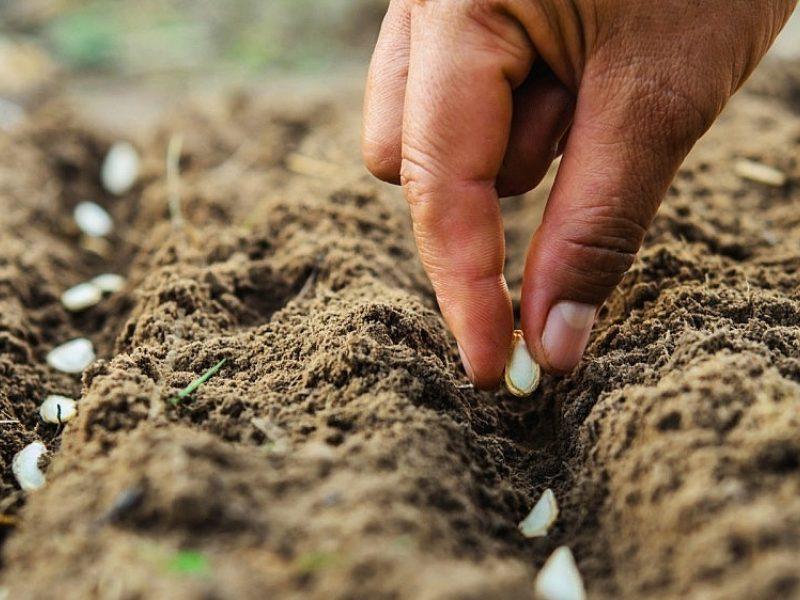 10 žingsnių, kurie derlių padės auginti lengviau