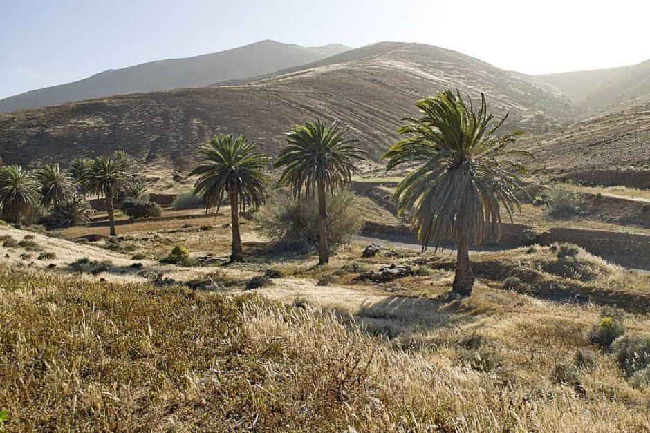 Fuerteventūra: amžinas pavasaris dykumoje ir daug malūnų