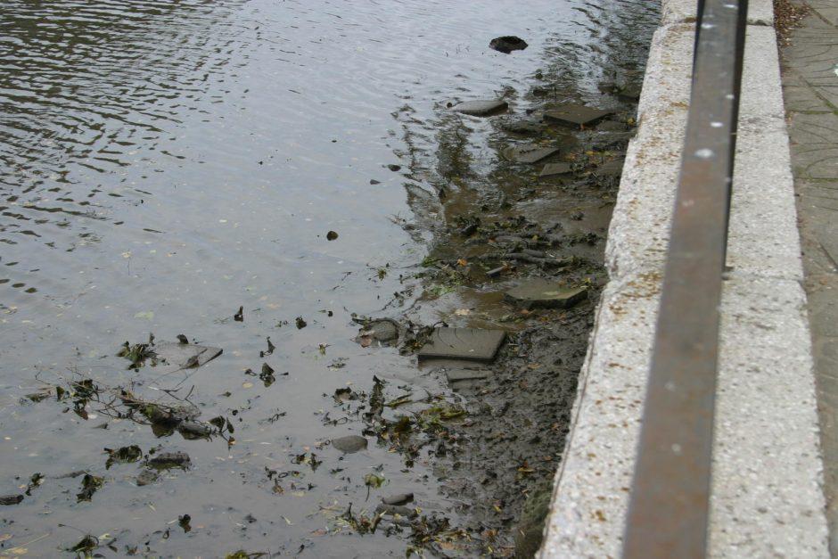 Savivaldybė valys Danės upę