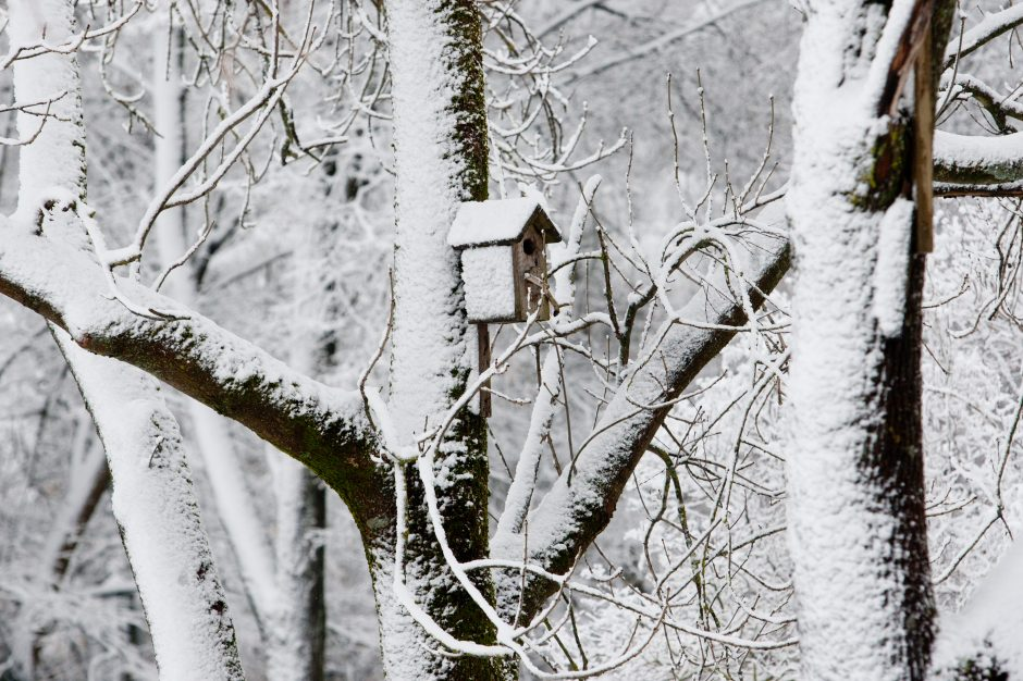 Savaitės orai: žiema įsitvirtina – kasdien bus vis šalčiau