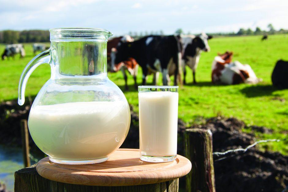 Geriant nevirintą pieną – rizika užsikrėsti erkiniu encefalitu