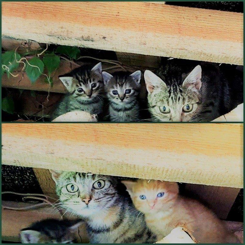 Katės gelbsti mus