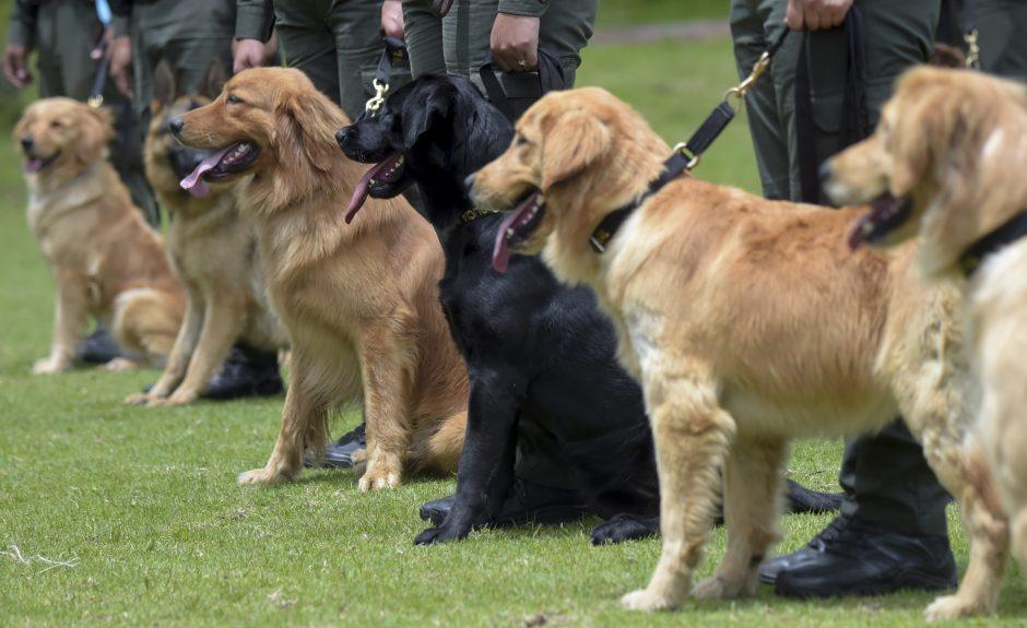 100 gelbėtojų su šunimis ieškojo... namuose po sofa lindėjusio vaiko