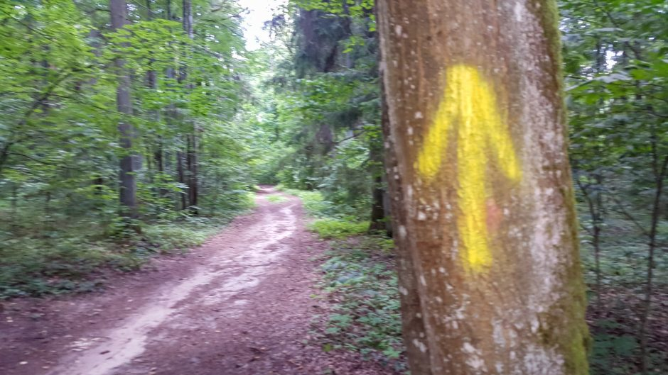Mina ant sąžinės renginių organizatoriams: grafičio vandalai persikėlė į mišką