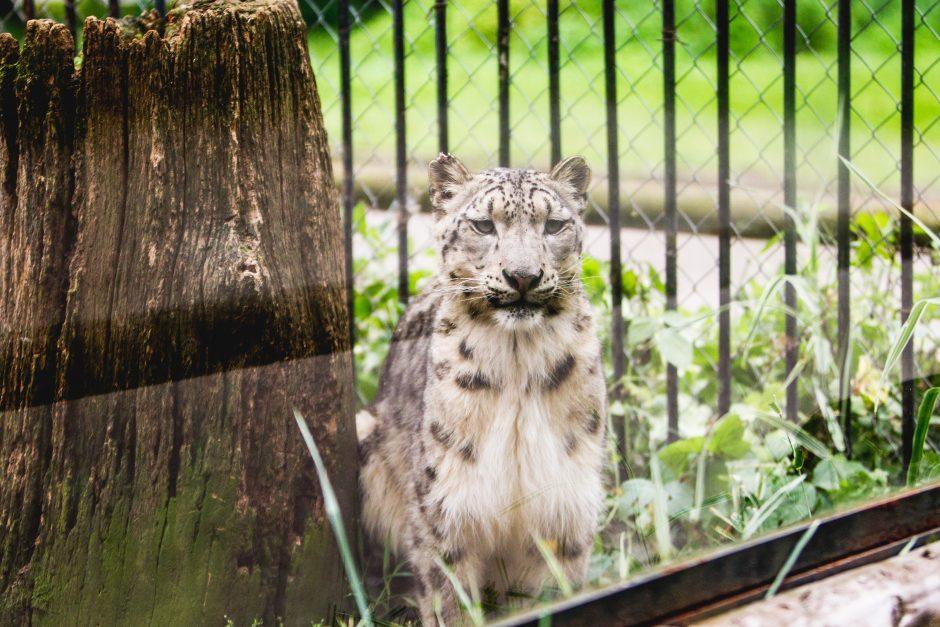 Žodį dėl Zoologijos sodo rekonstrukcijos tarė ir pirkimų tarnyba