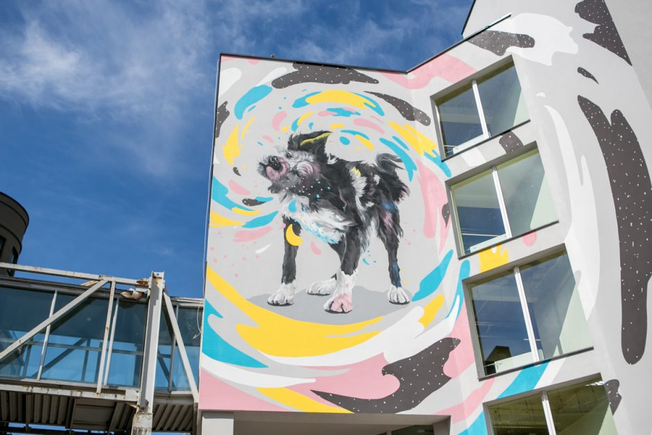 Kauną toliau spalvina piešiniai: praeivių žvilgsnius kausto didžiulis šuo