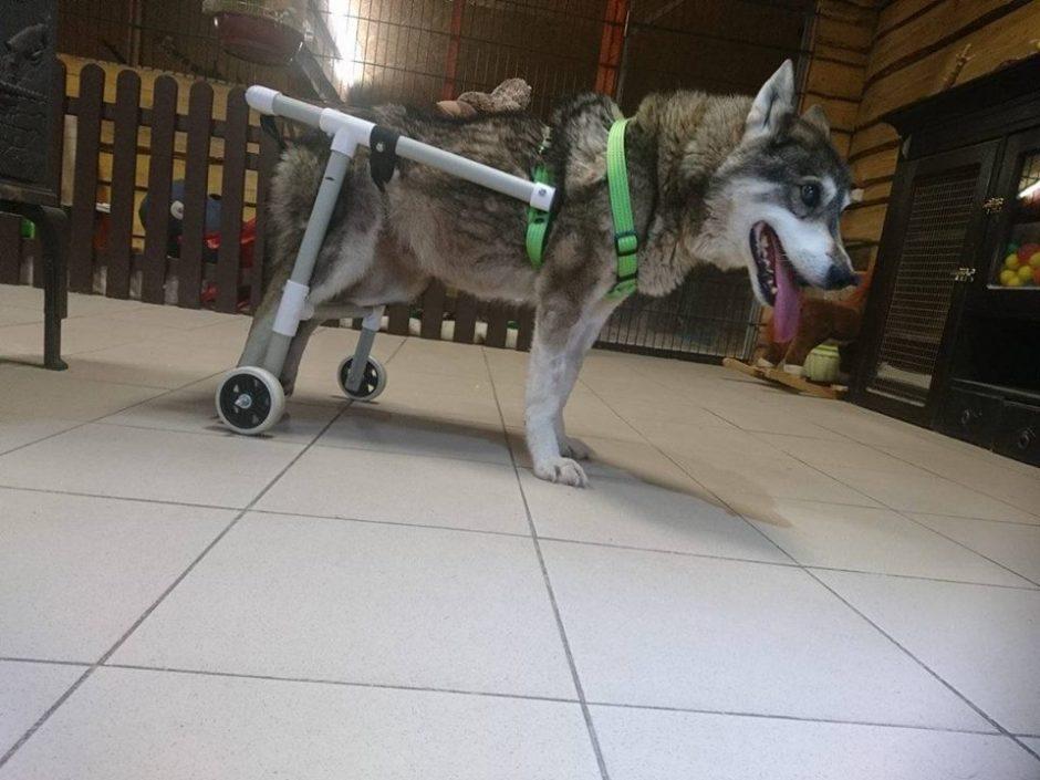 Padėkime tik su ratukais vaikščiojančiam šuneliui