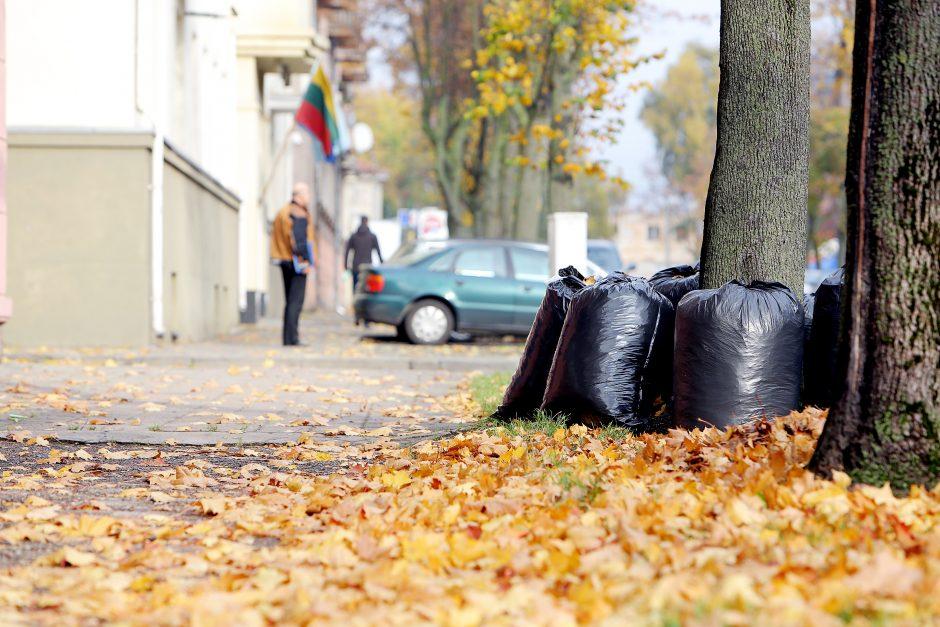 Kur klaipėdiečiams dėti sugrėbtus lapus?