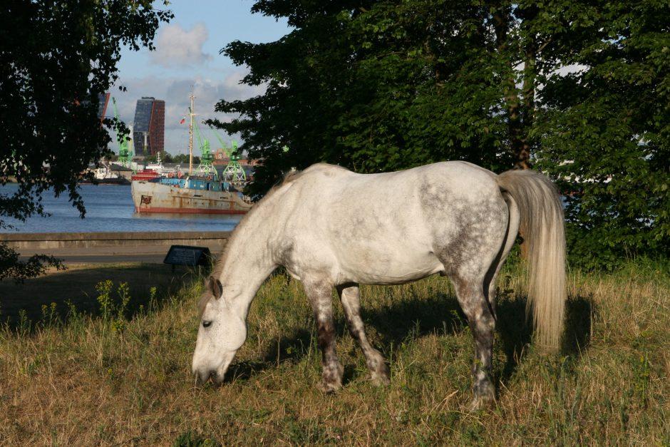 Iš Smiltynės užsimota išginti vasarą karietomis poilsiautojus vežiojančius arklius