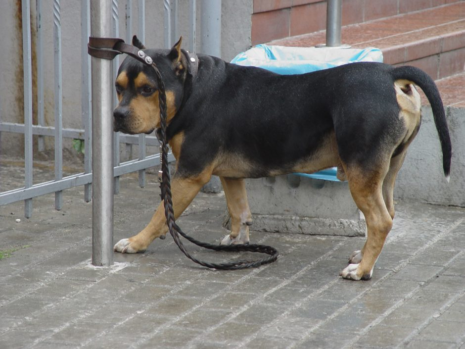 Pabodęs šuo – lyg daiktas