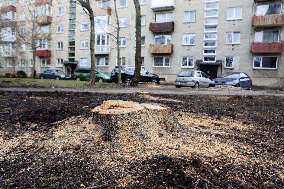 Medžiai mieste: dėl ko kyla konfliktai?
