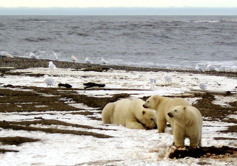 Mokslininkai: jūros lygis kyla vis sparčiau