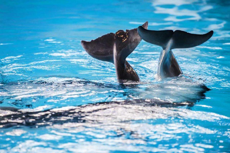 """Visą vasarą – akcija """"Tau ledai, o Jiems delfinų pagalba"""""""