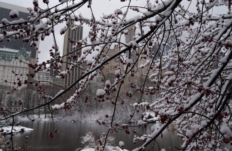 Pavasario pūgos JAV