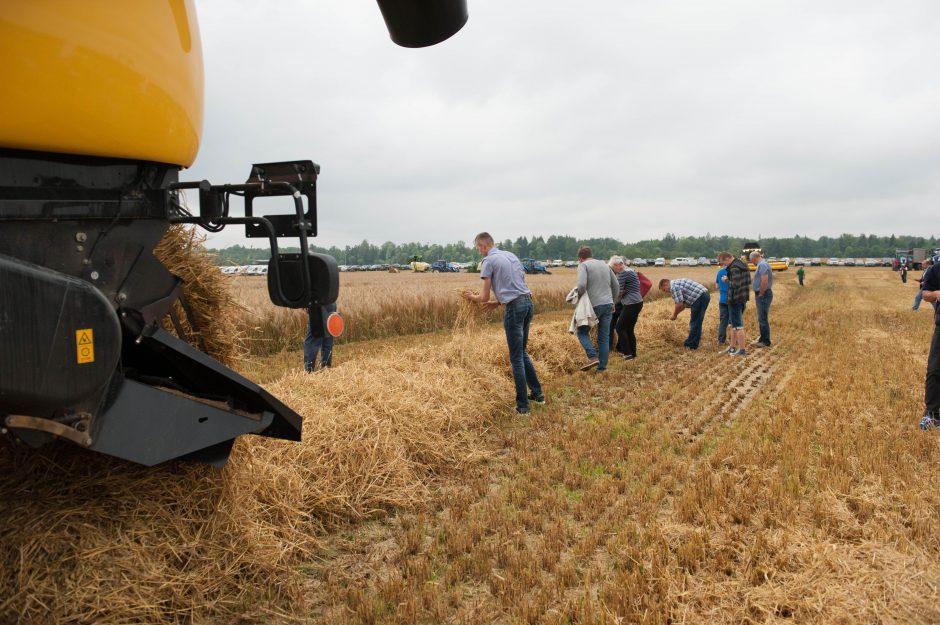 Javų derlius bus panašus kaip pernai?