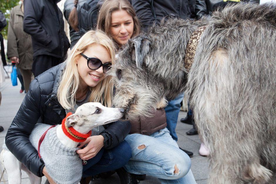 Sostinės centre dėmesį traukė neįprasta gyvūnų eisena